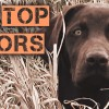 Copper Top Labradors at Outdoorsman's Country
