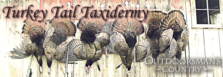 Home Banner - Turkey Tail Taxidermy