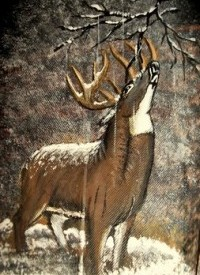 Winter Whitetail